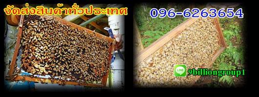 ขายอุปกรณ์เลี้ยงผึ้งBeeนมผึ้งราคาถูกชุดกันผึ้งแผ่นรังเทียมผึ้งโทร0966263654