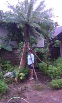 เชียงใหม่รับจัดสวนรับปูหญ้าเชียงใหม่ cp all การันตี ดี ถูก